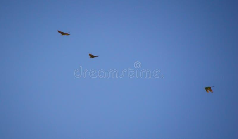 Oiseaux et leurs qualifications étonnantes avec leurs belles couleurs photographie stock libre de droits