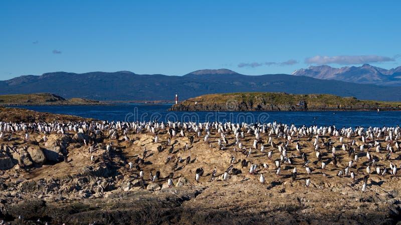 Oiseaux et phare dans la Manche de briquet près d'Ushuaia images libres de droits