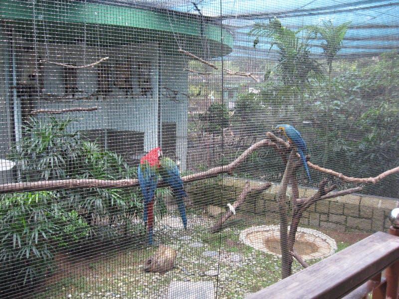 Oiseaux exotiques à la volière, parc de Kowloon, Hong Kong photos stock
