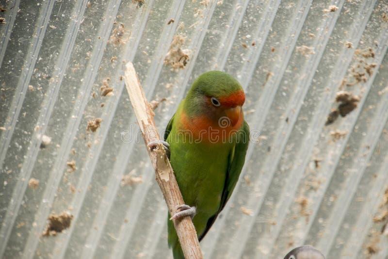 Oiseaux exotiques au zoo images stock