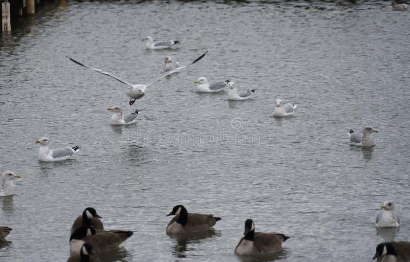 Oiseaux foncés et légers isolés images libres de droits