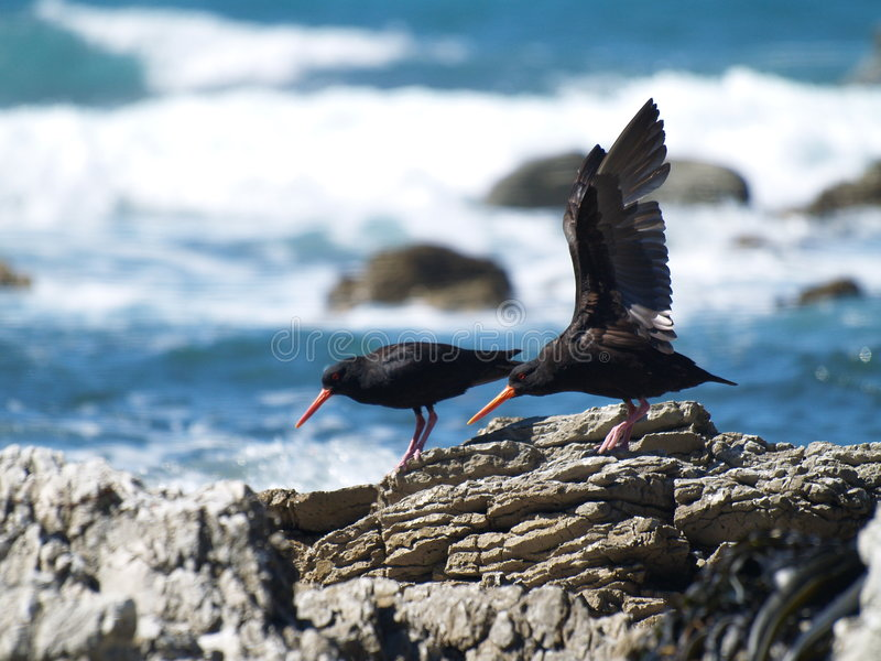 Oiseaux marins dans Kaikoura image stock