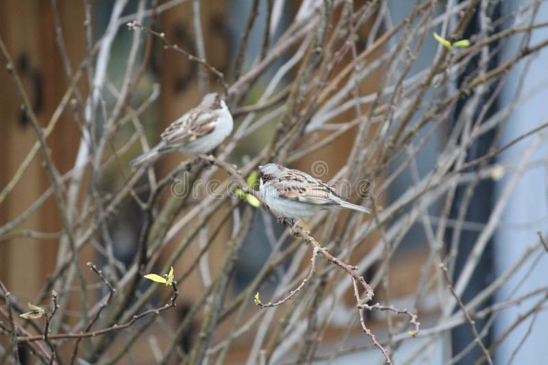 Oiseaux mignons avec la nature photo stock