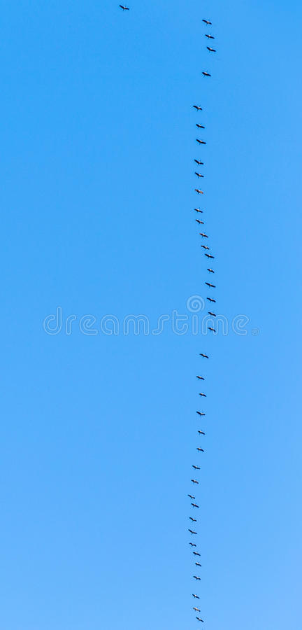 Oiseaux migrateurs sur leur chemin images libres de droits