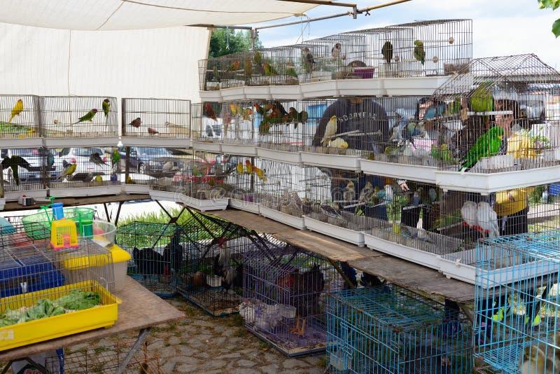 Oiseaux mis en cage image stock