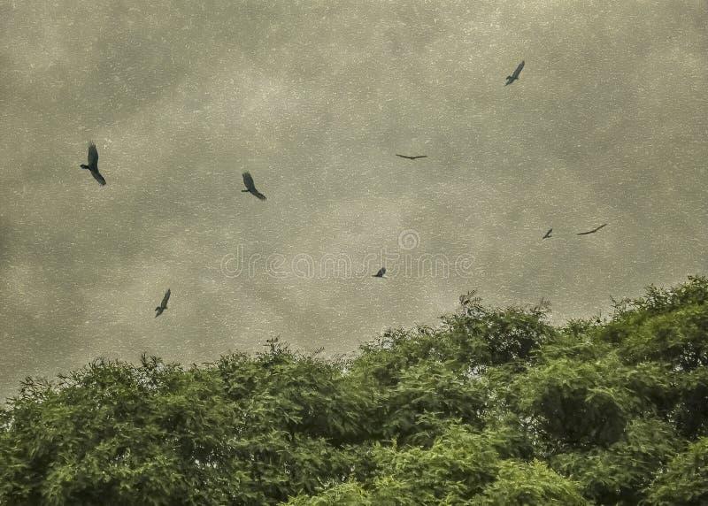 Oiseaux noirs pilotant la photo grunge de style de vintage images stock