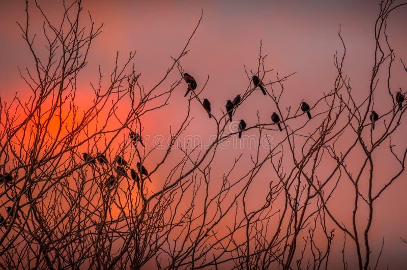 Oiseaux noirs silhouettés contre un ciel foncé images libres de droits