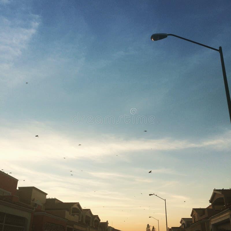 Oiseaux pendant le coucher du soleil photographie stock libre de droits