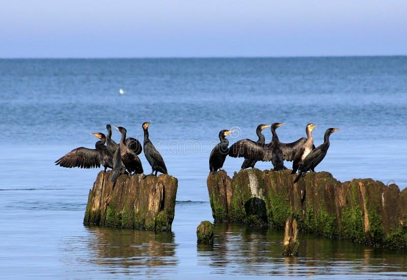 Oiseaux pendant le matin photographie stock