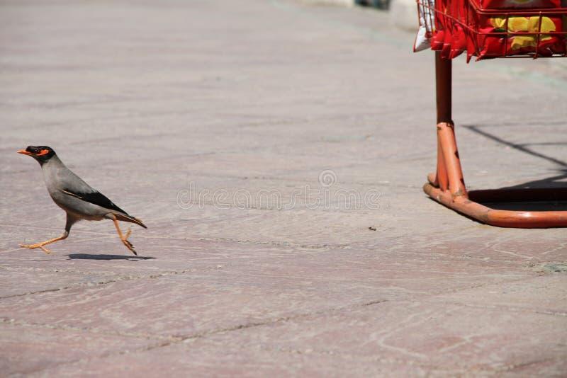 Oiseaux prêts à voler en air photographie stock