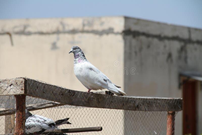 Oiseaux prêts à voler en air images stock
