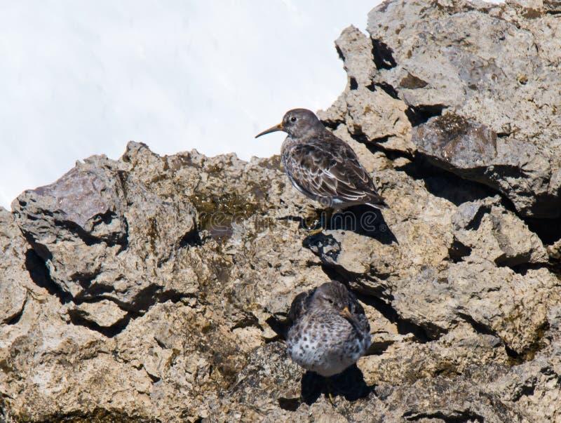 Oiseaux qui vivent près de la mer photo libre de droits