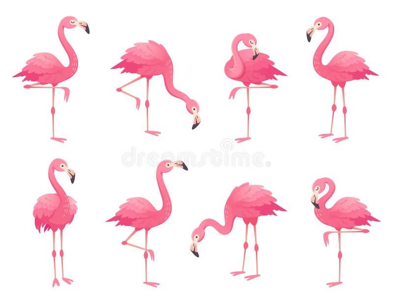 Oiseaux roses exotiques de flamants Le flamant avec les plumes roses se tiennent sur une jambe Vecteur attrayant de bande dessiné illustration stock