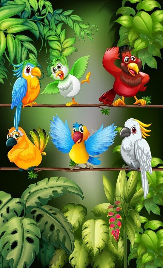 Oiseaux sauvages se tenant sur la branche illustration libre de droits