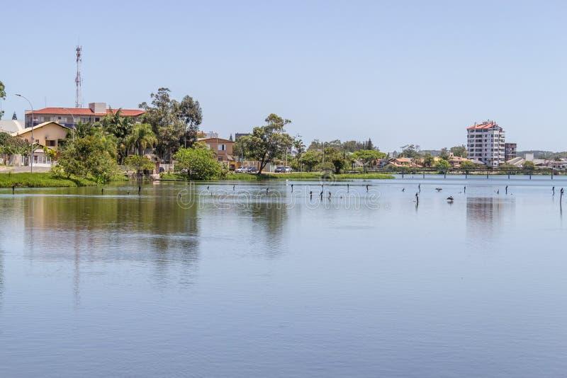 Oiseaux se reposant au lac Violao en Torres photographie stock