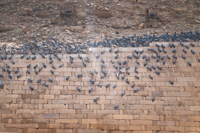 Oiseaux se reposant sur le mur de fort image stock