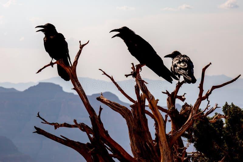 Oiseaux silhouettés sur les branches d'arbre nues photos libres de droits