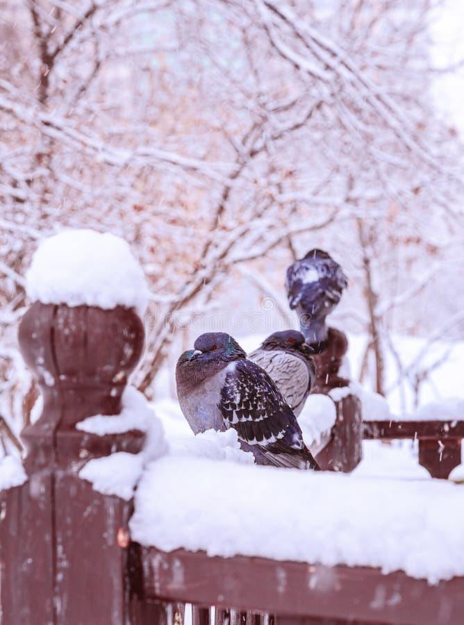 Oiseaux sous la neige de ressort photos libres de droits