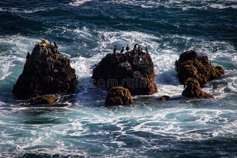Oiseaux sur des seastacks sur l'océan pacifique image libre de droits