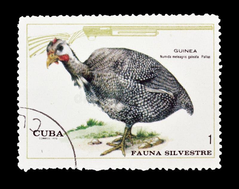 Oiseaux sur des timbres-poste image stock