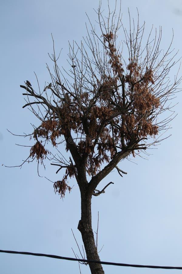 Oiseaux sur l'arbre photos stock