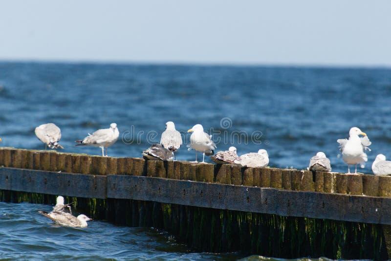 Oiseaux sur la dent photo stock