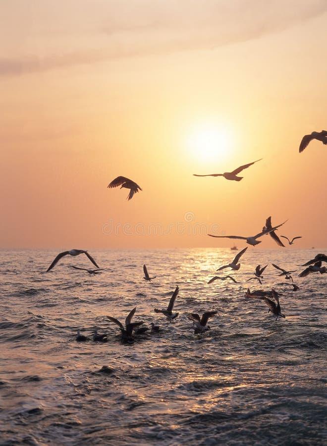 Oiseaux sur la mer photo stock