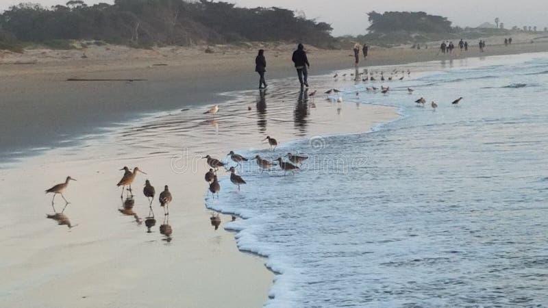 Oiseaux sur la plage photo libre de droits