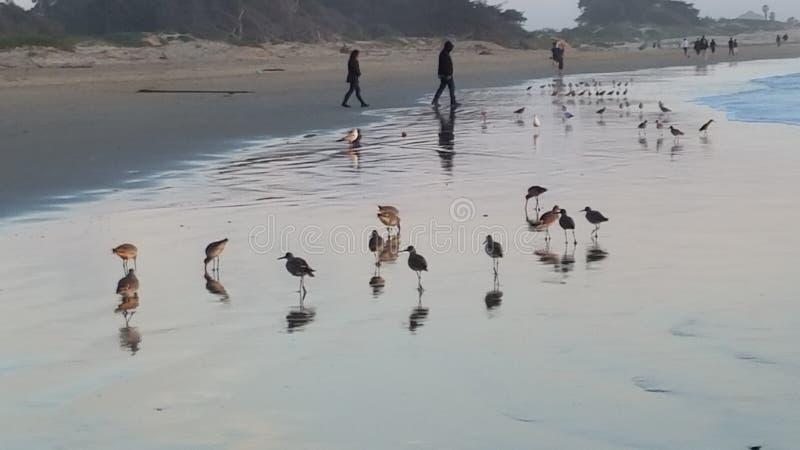 Oiseaux sur la plage photographie stock