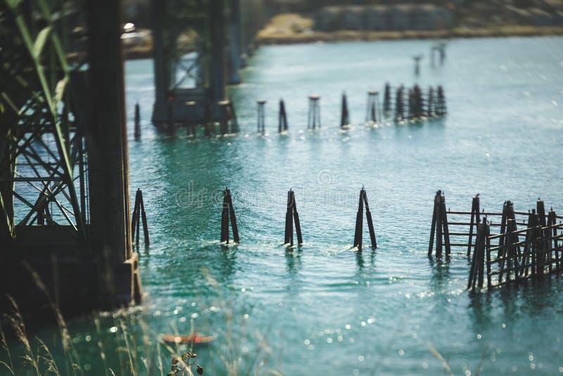Oiseaux sur le briseur de vague en bois dans un Green Bay images libres de droits