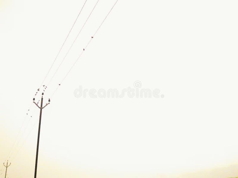 Oiseaux sur le câble photos libres de droits