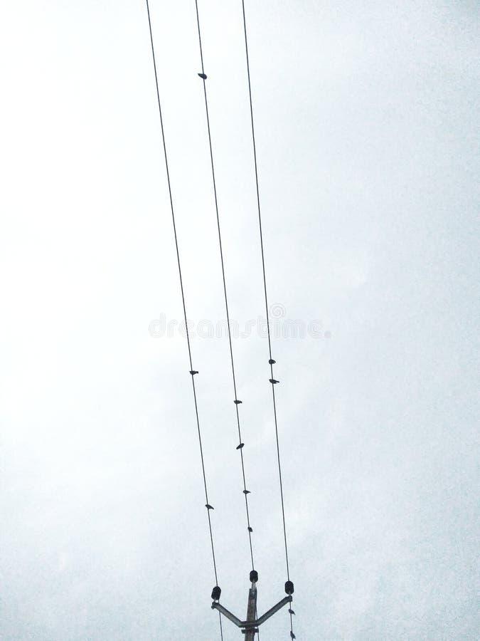 Oiseaux sur le câble photographie stock libre de droits