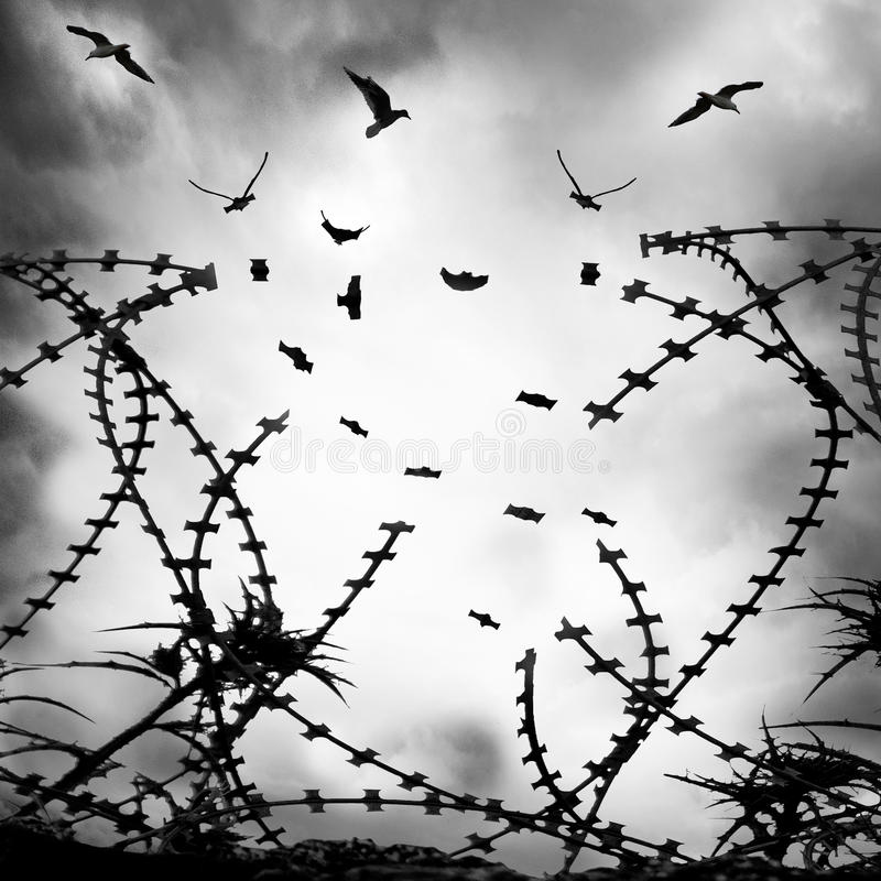 Oiseaux sur le fil images libres de droits