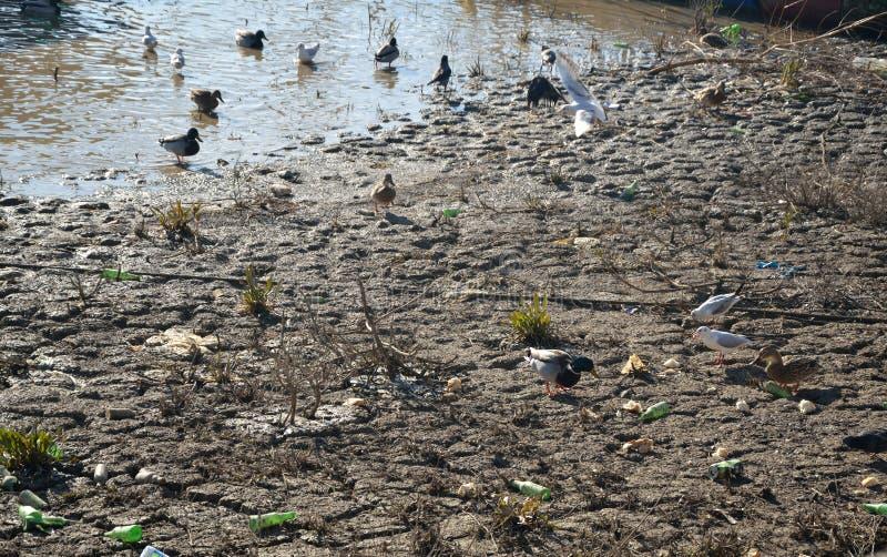 Oiseaux sur le rivage sale image stock