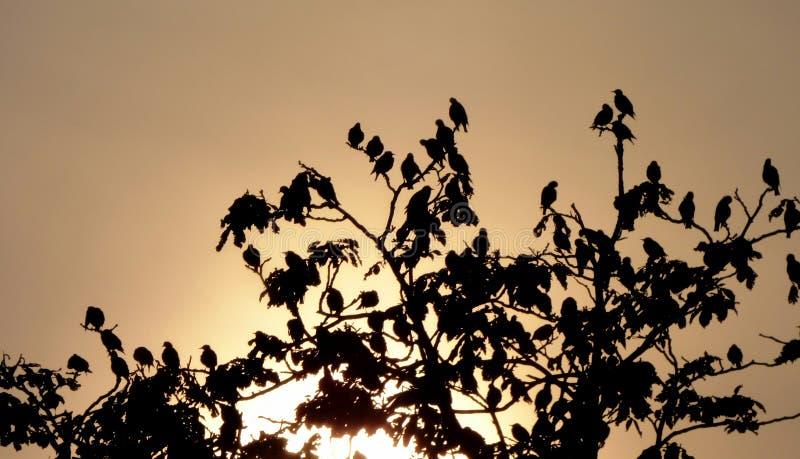 Oiseaux sur un arbre photo libre de droits