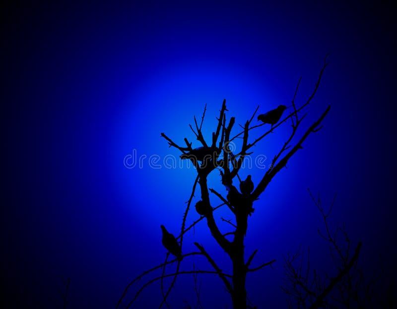 oiseaux sur un branchement photographie stock libre de droits
