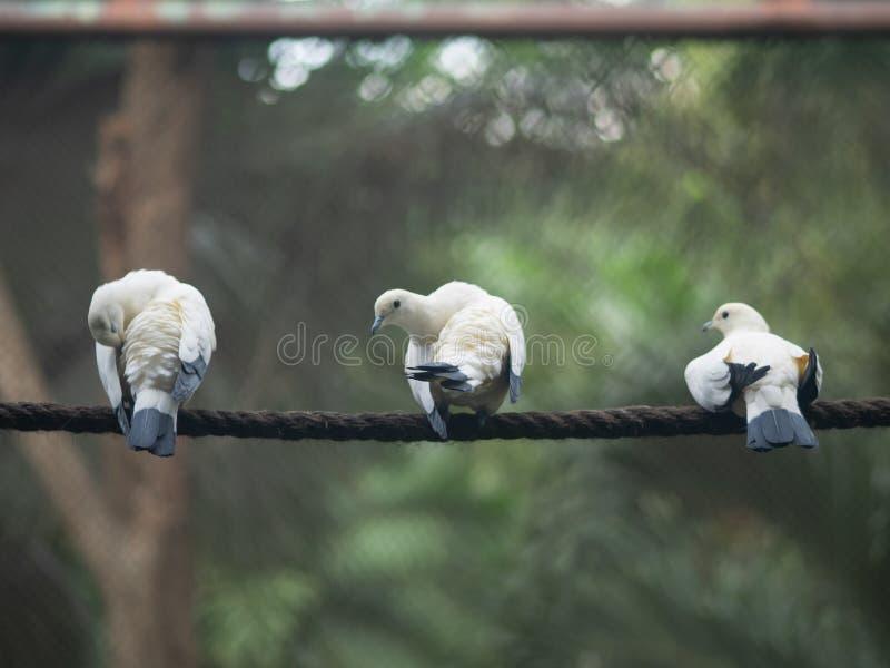 3 oiseaux photos libres de droits