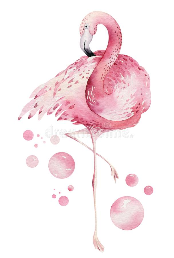 Oiseaux tropicaux d'aquarelle tir?e par la main r?gl?s du flamant Illustrations roses exotiques d'oiseau, arbre de jungle, art ?  illustration de vecteur