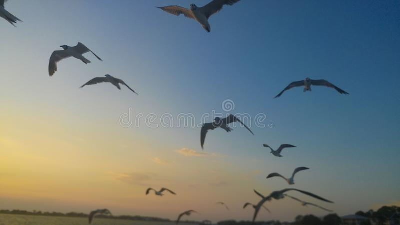 Oiseaux volant à la plage image stock