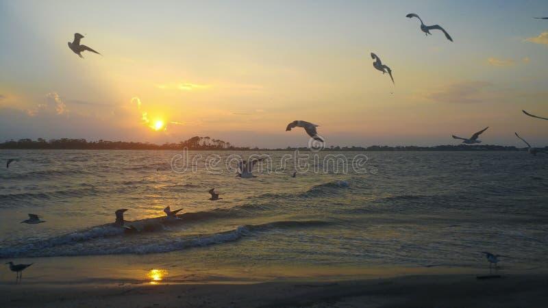 Oiseaux volant à la plage photo stock