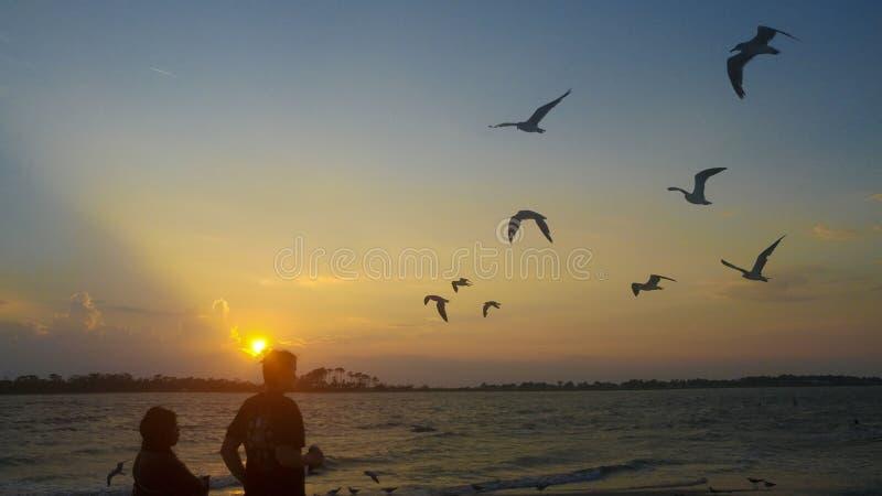 Oiseaux volant à la plage images libres de droits