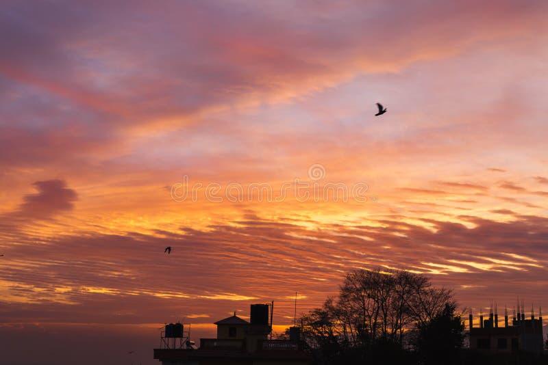 Oiseaux volant pendant le matin au temps de lever de soleil, fond de lever de soleil photo stock