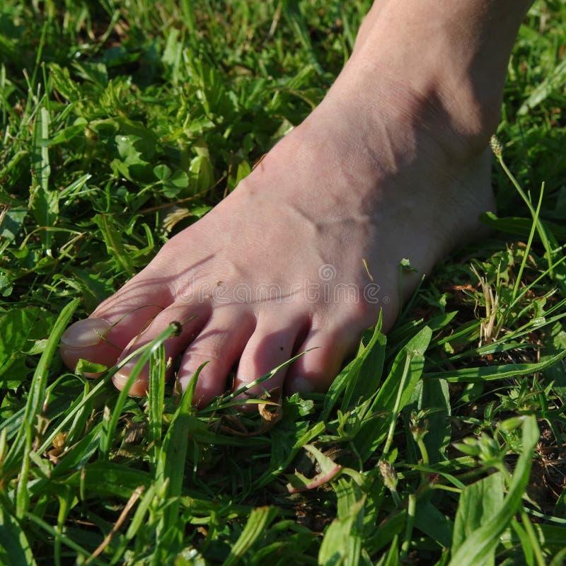 oisolerad fot gräs royaltyfri foto