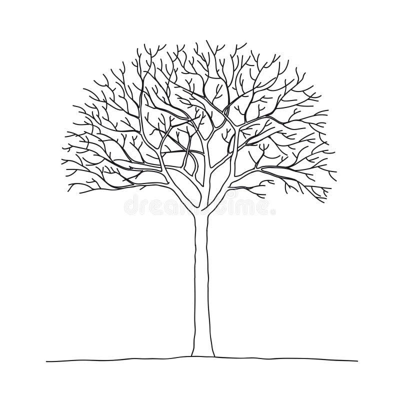 oisolerad tree vektor illustrationer