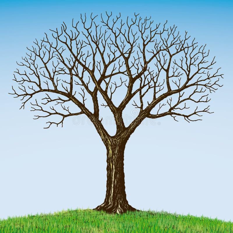 oisolerad tree stock illustrationer