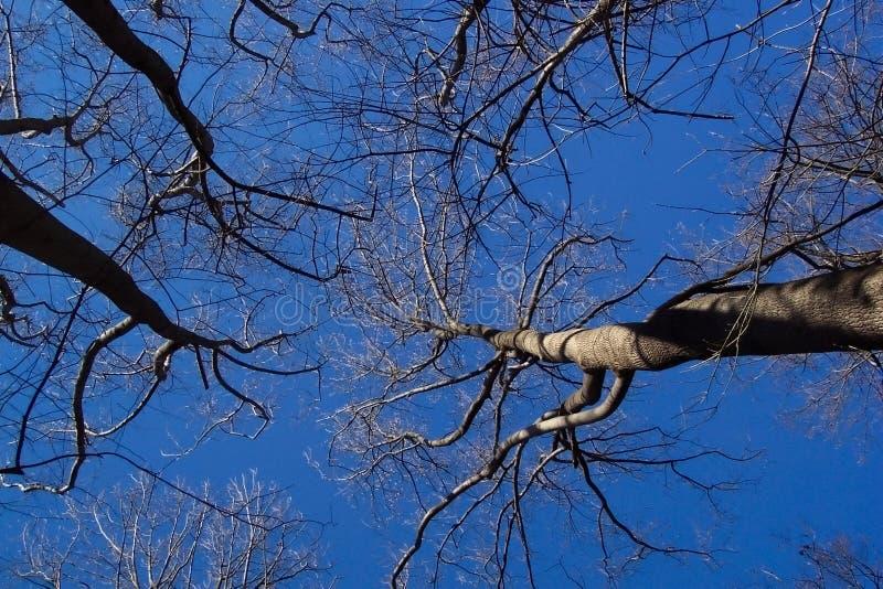 Download Oisolerad treesvinter arkivfoto. Bild av leaves, vinter - 45258
