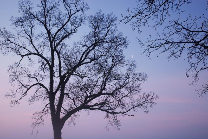 oisolerade halvmånformigmoontrees arkivbilder