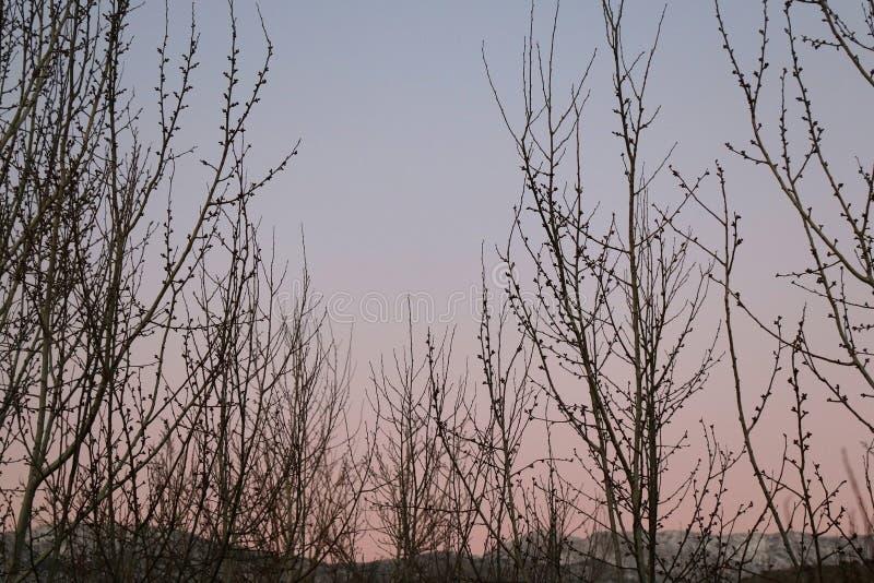 oisolerade trees royaltyfria bilder