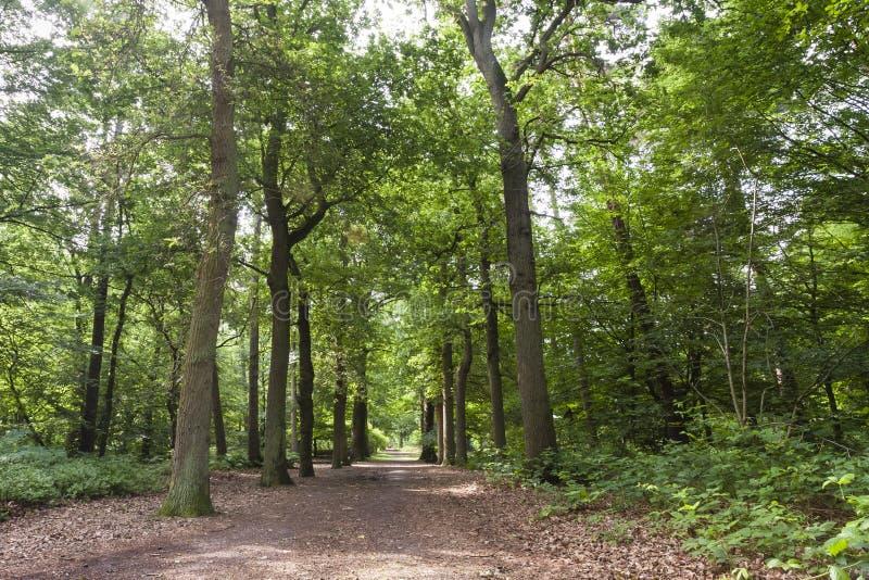 Oisterwijkse Bossen en Vennen, Oisterwijk森林和市分 库存图片