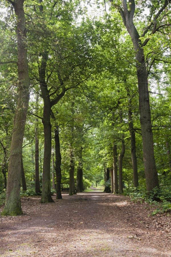 Oisterwijkse Bossen en Vennen, Oisterwijk Forests and Fens. Wandelpad in de Oisterwijkse Bossen en Vennen; Hiking path at the Oisterwijk Forests and Fens stock photos